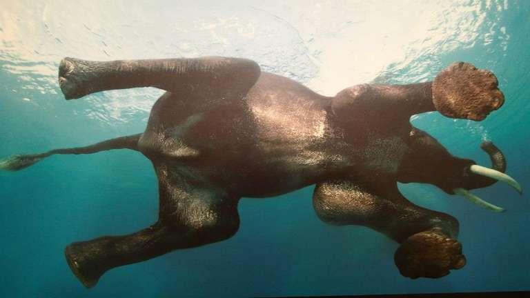 elephant_beach